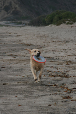 Frisbee fun at the beach