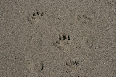 Beach feet and puppy paw prints