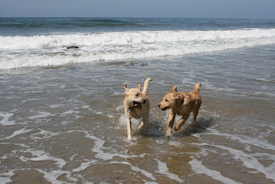 Dog beach puppy pals