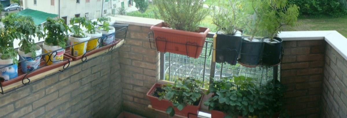 L 39 orto sul balcone e terrazzo di casa l 39 orto sul balcone for Tutto per il balcone
