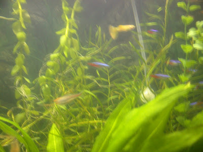 Cloudy Water Fish Tank After Cleaning