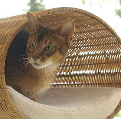 modern Cat Bed Wicker