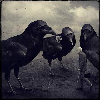 sarolta ban, hombre entre cuervos