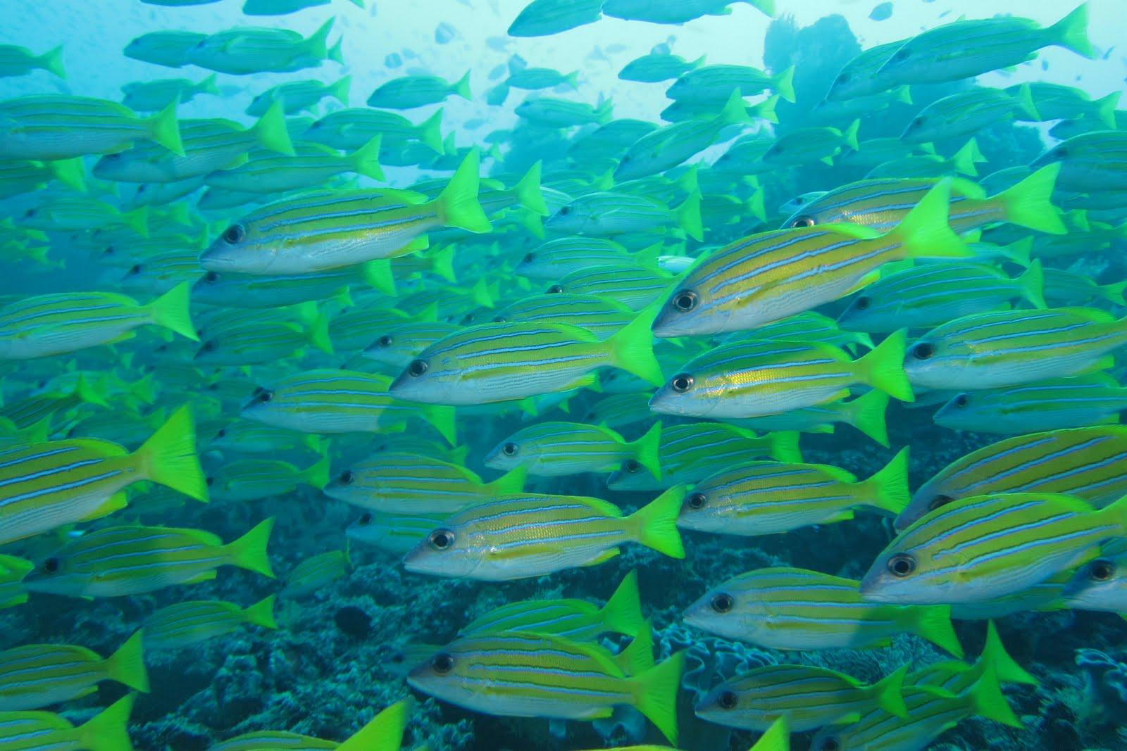 Marine Ecosystem - Bing images