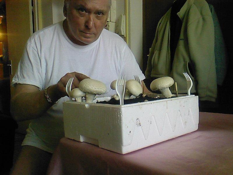 6 rue de l 39 etoile haguenau les champignons poussent dans la salle de bain. Black Bedroom Furniture Sets. Home Design Ideas