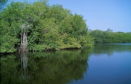 Realidad ambiental tala de rboles y ecosistema for Medio en el que habitan los arboles