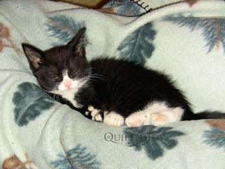 cuttie pie Oscar kitten