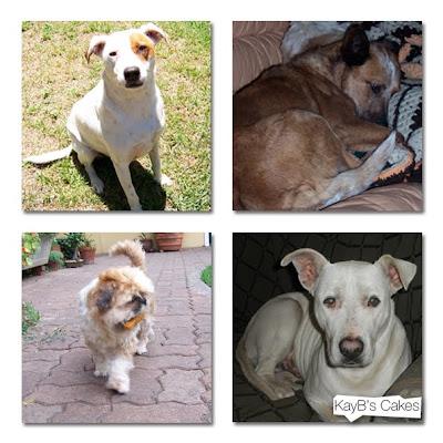 Dog Adoption Australia Melbourne
