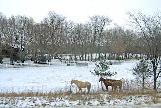 horses 0249