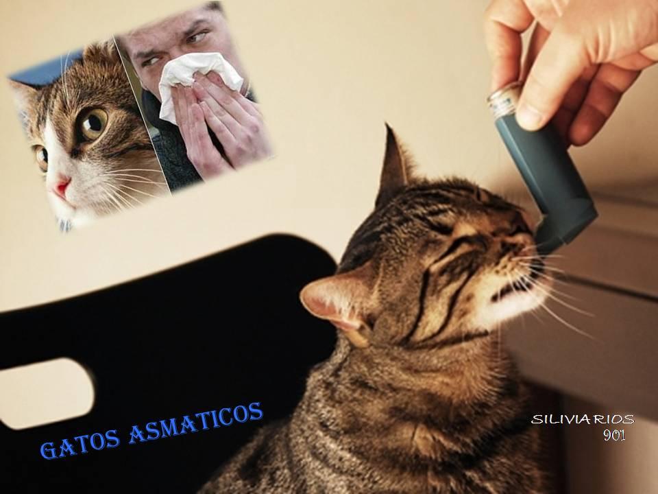 Rinotraqueitis felina