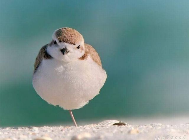 Cool Animals Pictures: Funny Birds Images