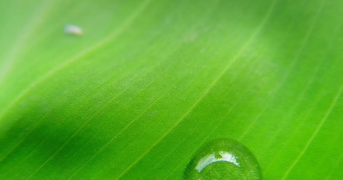 3d Wallpaper Cute Girl Green Leaf And Water Drops