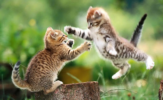 Cute and Funny Cats Images || Funny Cats Wallpapers Free Download || Awesome Cat Pictures || Fighting Cats Images