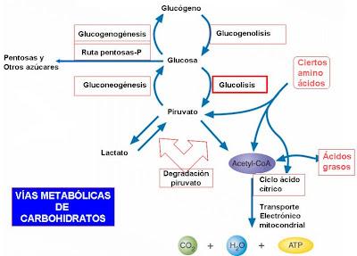 Ibuprofeno metabolismo Una vez Ibuprofeno metabolismo dos veces 6 razones por las cuales no debería Ibuprofeno metabolismo TRICHO