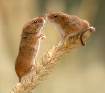 Beautiful Pictures Mice Are Sooo Cute