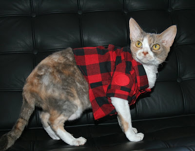 daisy the curly cat fashion friday my plaid flannel shirt
