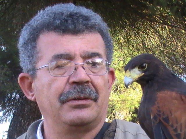 """Mi amigo y veterano cetrero Matias con su torzuelo """" El Doctor"""""""