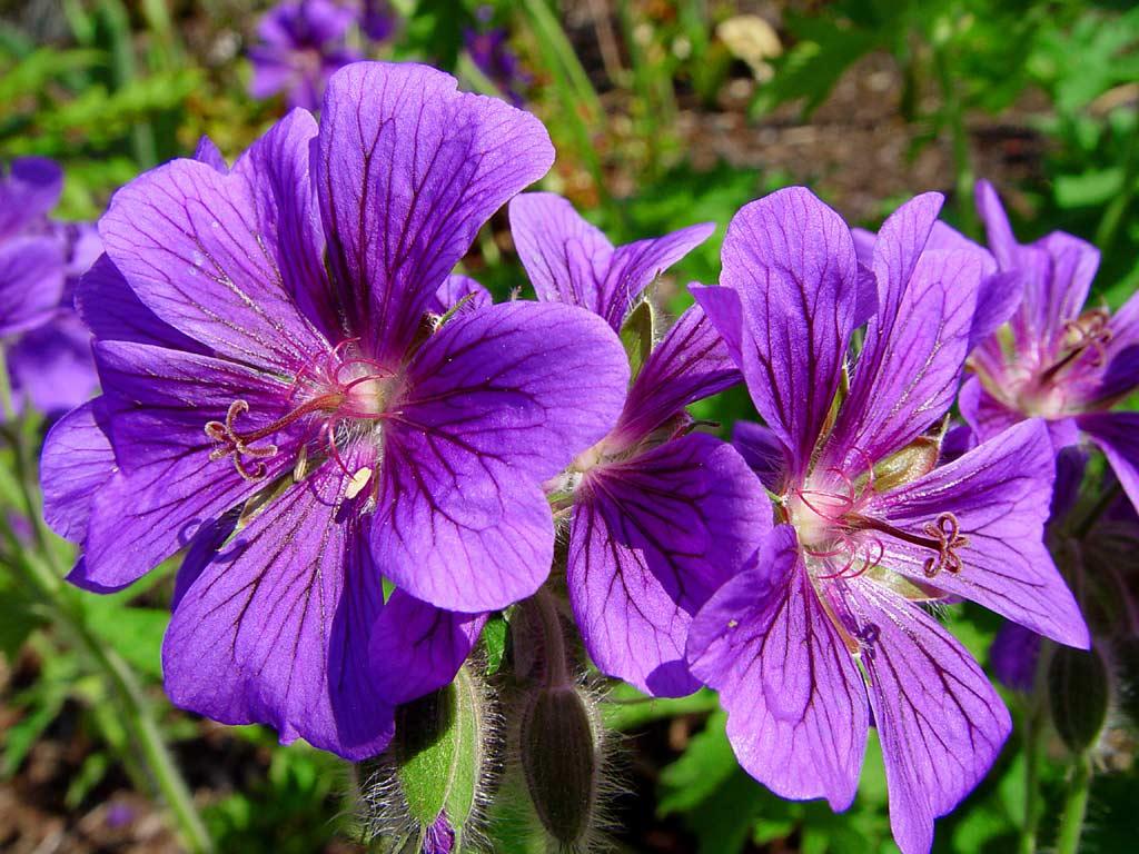 Beautiful Flowers | - photo#41