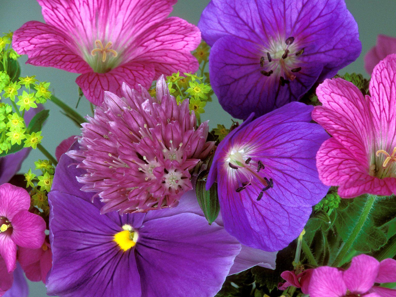 Beautiful Flowers | - photo#28
