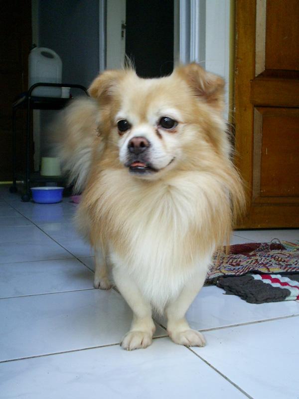 Sunshineoverme S Blog 2 Anjing Itu Bernama Bupi Dan Piko