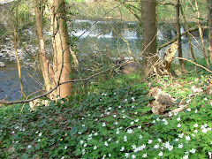 The weir from Grove Wood