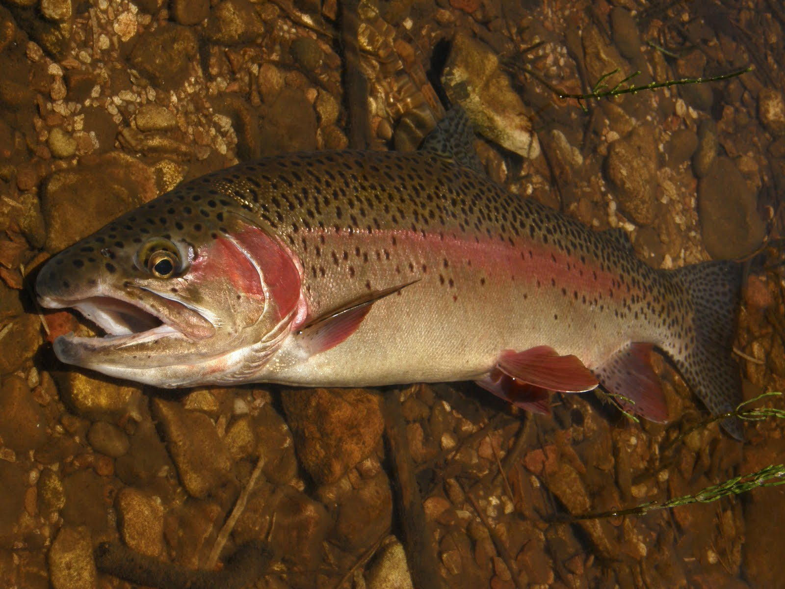 Oak Creek Angler: East Clear Creek, June 2010