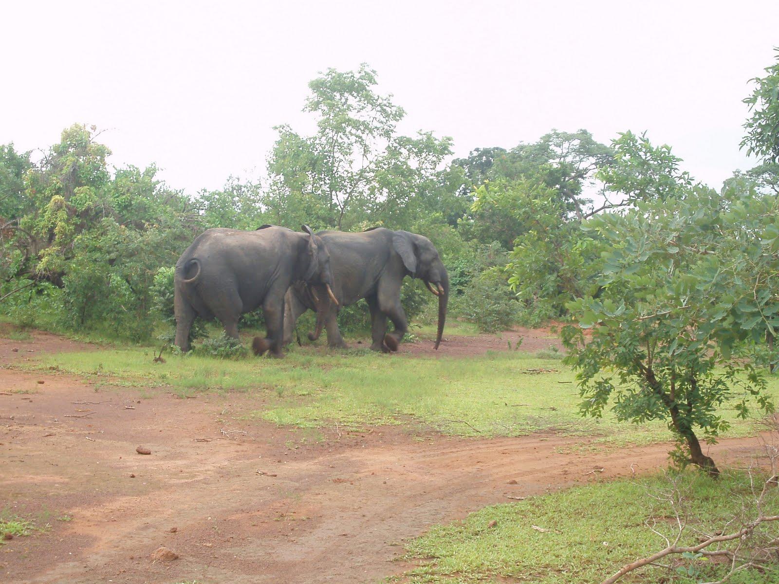 Ghana IPSF 2010: Mole National Park