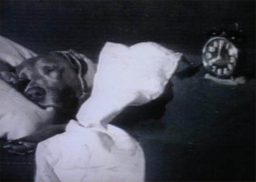 Dogtalk Dog Needs A Snooze Button