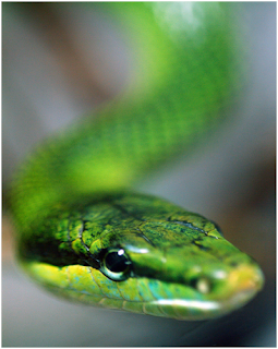 Snakes, Snake Amazing Facts