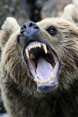 Cute Babies Pics Wallpaper Images Funny Stuff Very Funny Images Of Open Mouth Of Animals