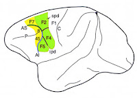 The Neurocritic: Mirror Neurons and Magical EFT Therapy Bears