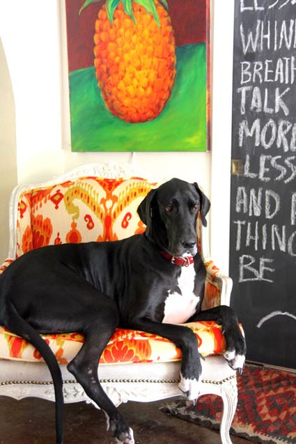 "As seen on Desire to inspire's ""Pets on furniture"""