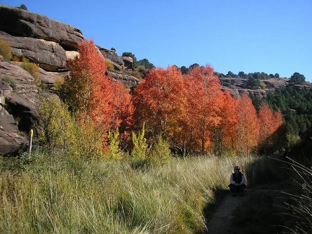 Pinar del Rodeno, Albarracín