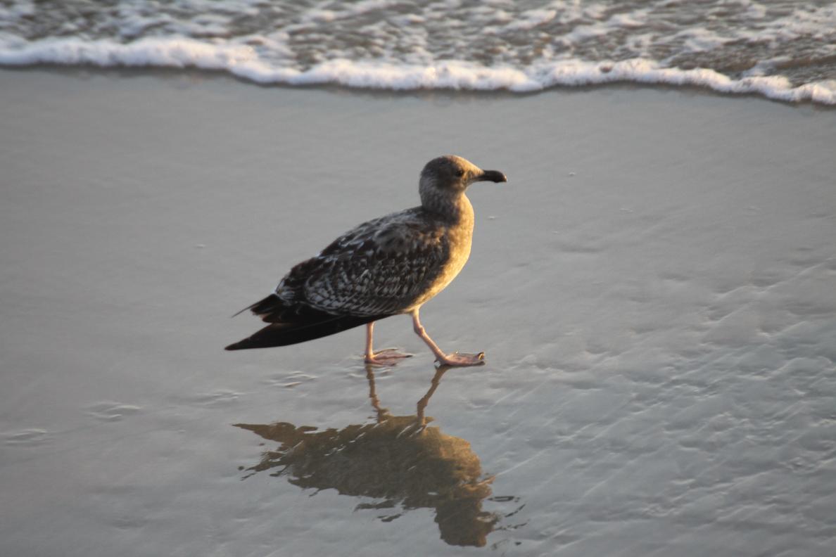 Michigan Exposures: Some Ocean Birds