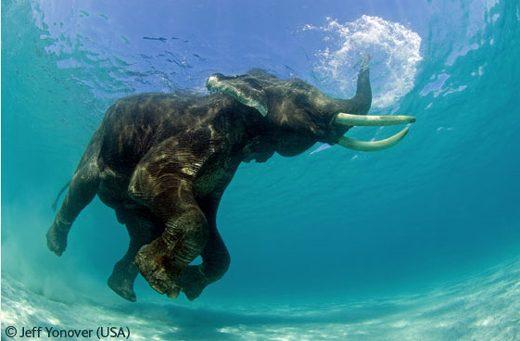 Most Amazing Animals Photos   Golberz.Com