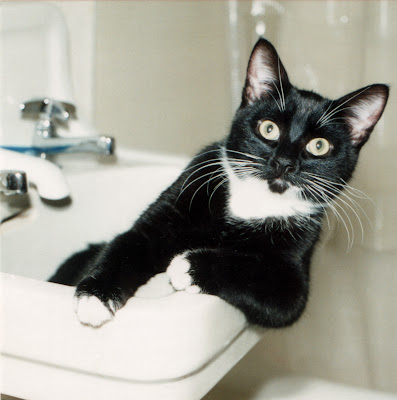 Jack in Sink (the early years) by grebo guru from flickr (CC-ND)