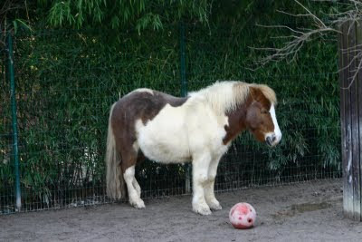 Charley, the Shetland Pony, bowling :-) by Deep Frozen Shutterbug from flickr (CC-NC)