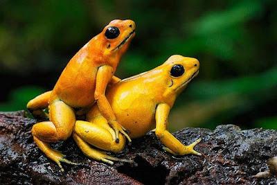 Frogg Sex 77