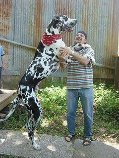 tallest-dog-world