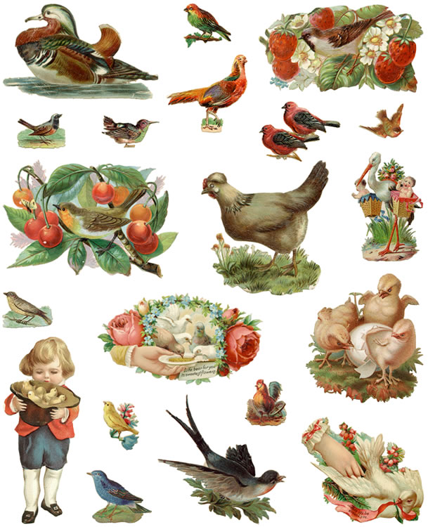 free clipart of vintage birds - photo #26