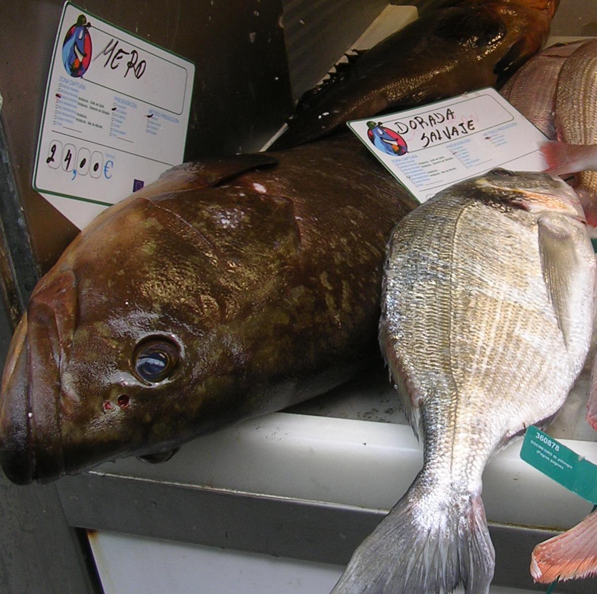 Lean kernel grouper dating