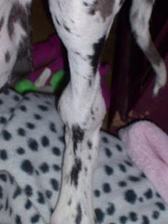 Vitamin C Great Dane Pet Dog Breeds: Hypert...