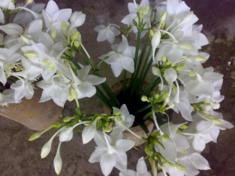 smart_ebook Bunga Bakung Bunga Lily