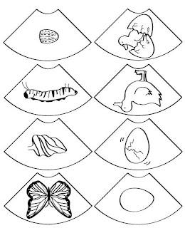 Kelebeğin Oluşumu Boyama Gazetesujin