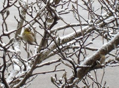 vogelgruppe des kerpener netzwerks