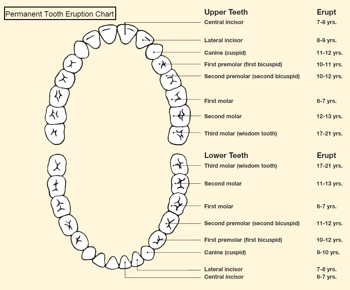 Tooth Diagram With Label Solar Panels Wiring Eruption Charts