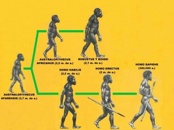 Evolución de los Humanos en la Tierra