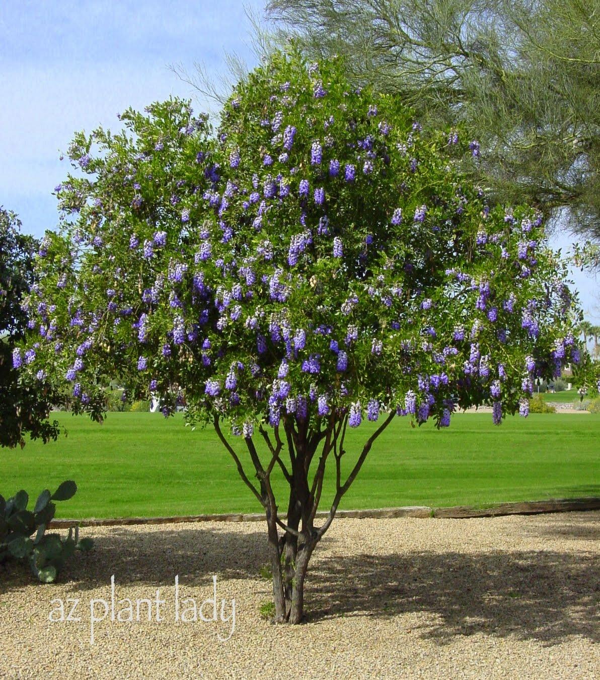 A Wonderful Dilemma Part 2 Ramblings From A Desert Garden