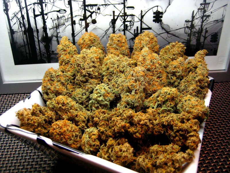 Strain Review Real Afghan Kush Hq Photos The 420 Shack