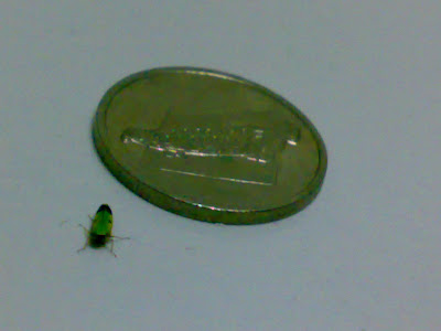 Pieces Of Me Annoying Green Bug